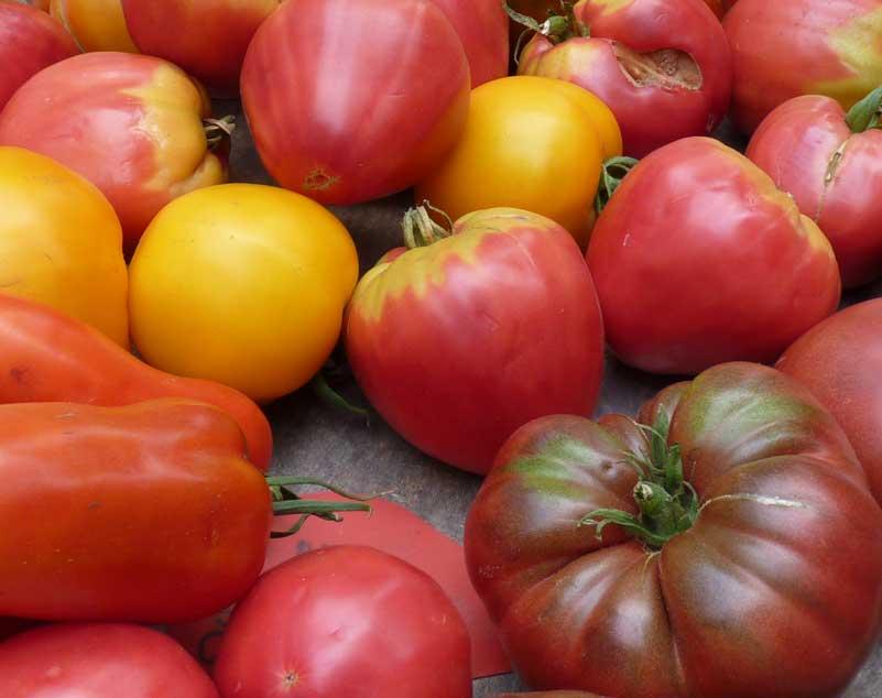 Tomates ecológicos, por F. Sternbald, Vivalebio