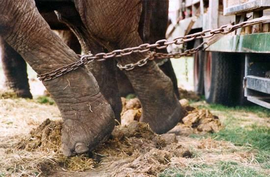 Catalunya avanza hacia la prohibición del circo con animales
