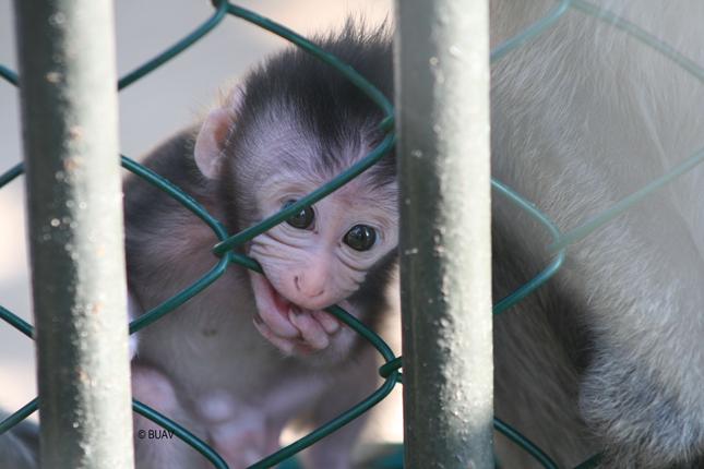 Trading in cruelty. Foto: BUAV.