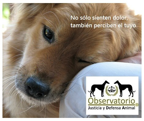 Foto: Observatorio Justicia y Defensa Animal