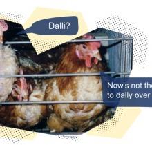 Tres motivos para rechazar los huevos del nº 3