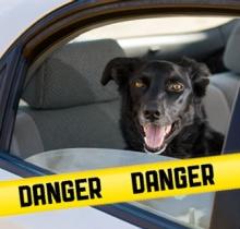El golpe de calor, una amenaza mortal para el perro